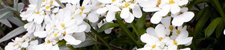 fleurs-2a