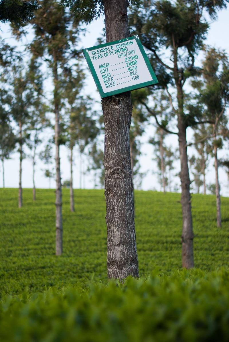 Inde-coonor-arbre-1