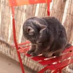 Blogueuse à chat…