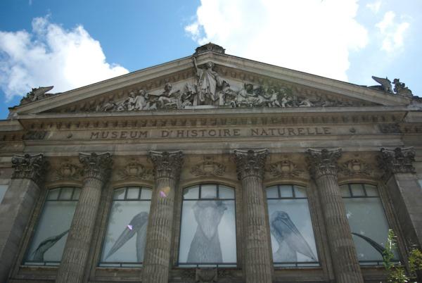 Museum D'histoire Naturelle London Museum d Histoire Naturelle