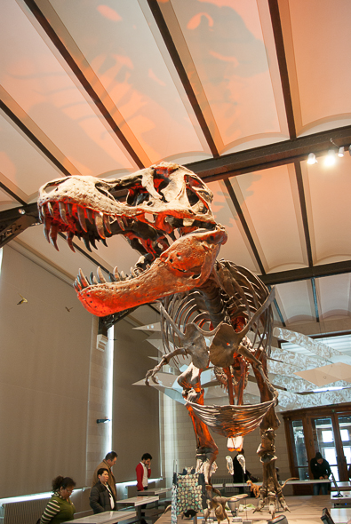 musee-histoire-naturelle-dino