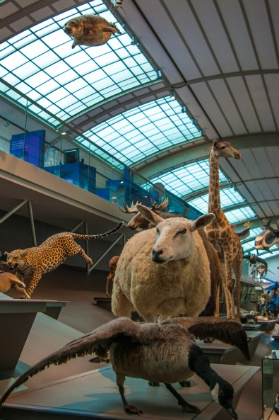musee-histoire-naturelle-galerie