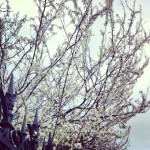 Mon cher hiver…