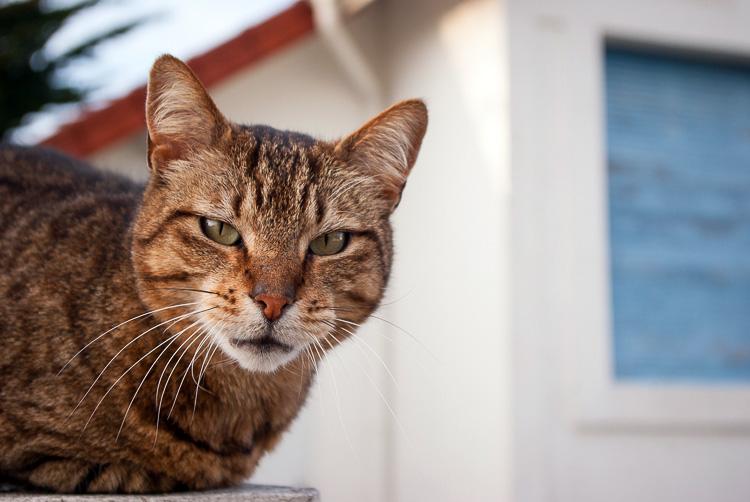 lafaute-sur-mer-chat-1