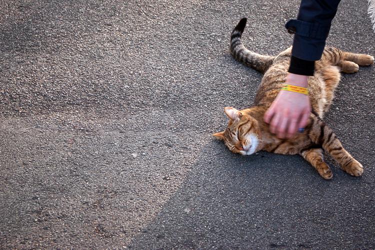 lafaute-sur-mer-chat-2