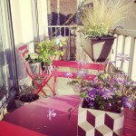 balcon-parisien-fleuri