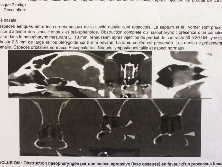 scanner tumeur chat nez