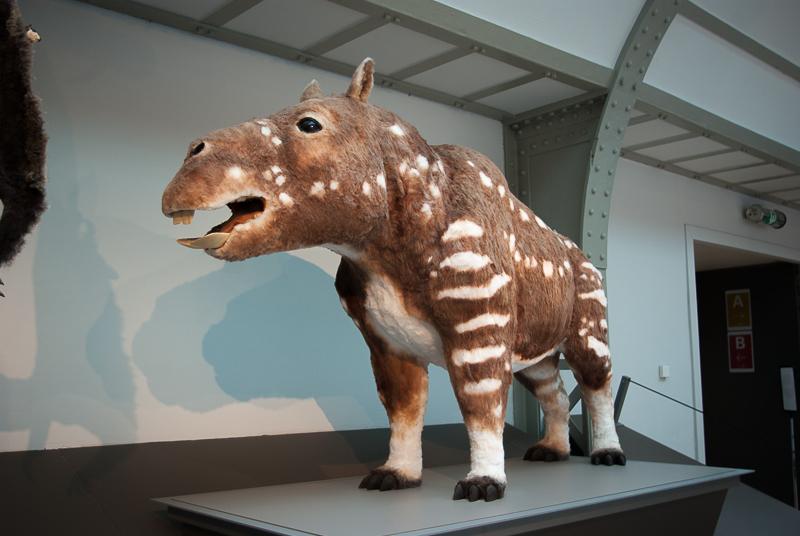 musee-histoire-naturelle-bestiole