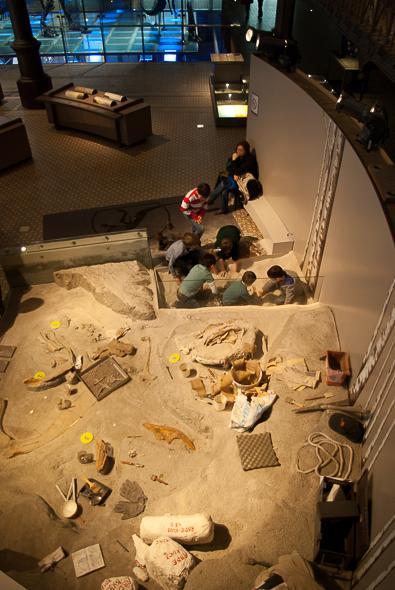musee-histoire-naturelle-enfant