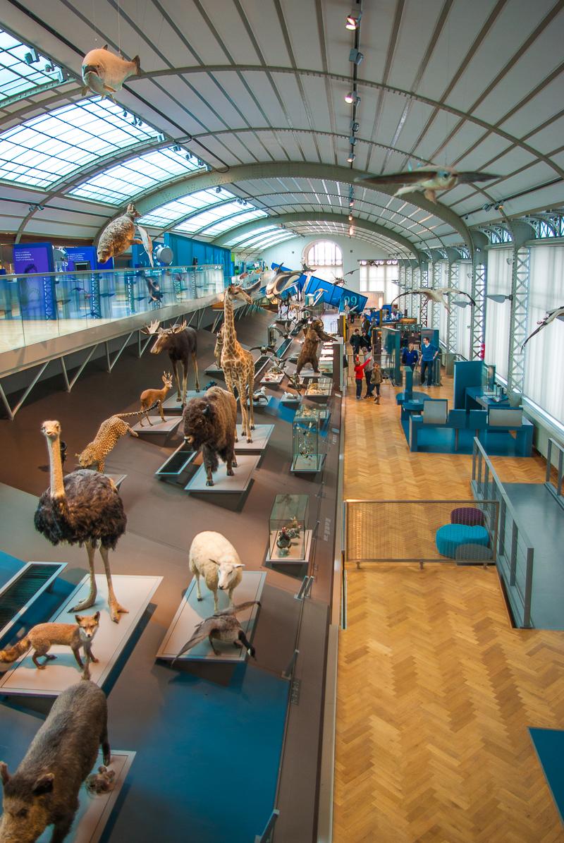 musee-histoire-naturelle-evolution