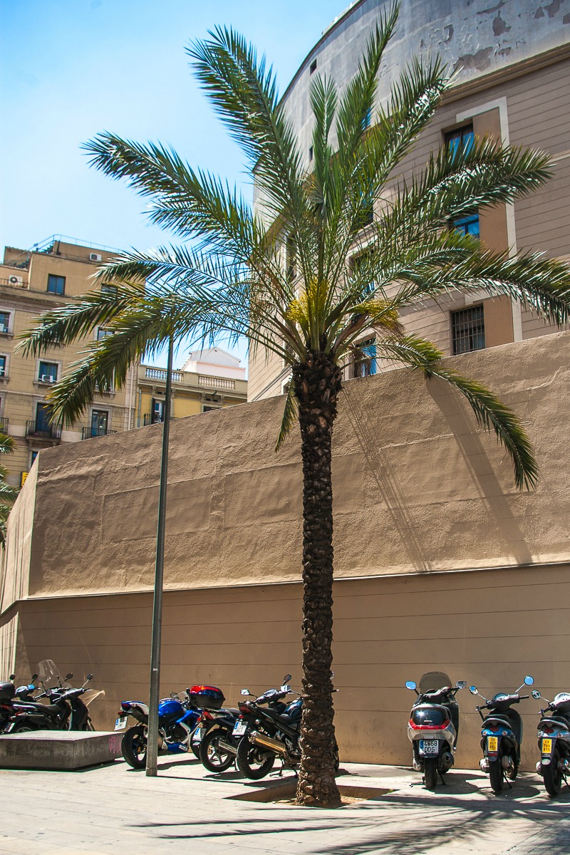 barcelona-palmier