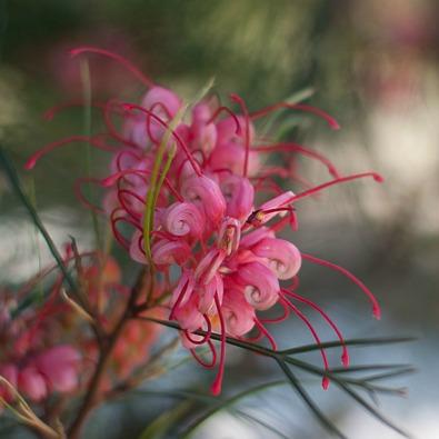 barcelone-montjuic-botanique-1