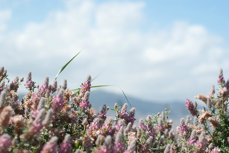 barcelone-montjuic-botanique-fleurs-1
