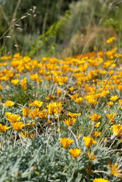 barcelone-montjuic-botanique-fleurs