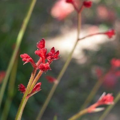 barcelone-montjuic-botanique