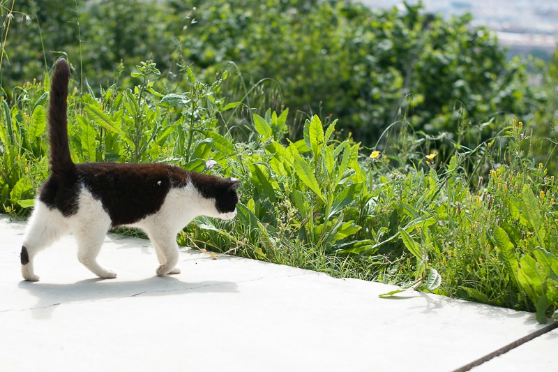 barcelone-montjuic-chat-2