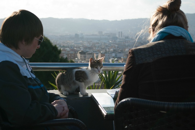 barcelone-montjuic-chat-3