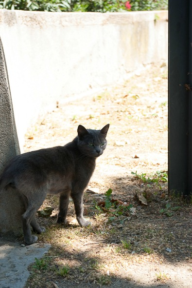 barcelone-montjuic-chat