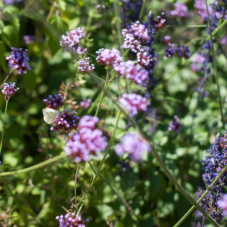 jardin-de-la-paix-geneve (4 sur 1)