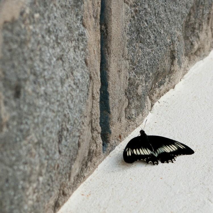 sainte-anne-yole-martinique-papillon