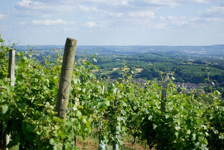 coteaux-du-saillant-Vezere-vigne
