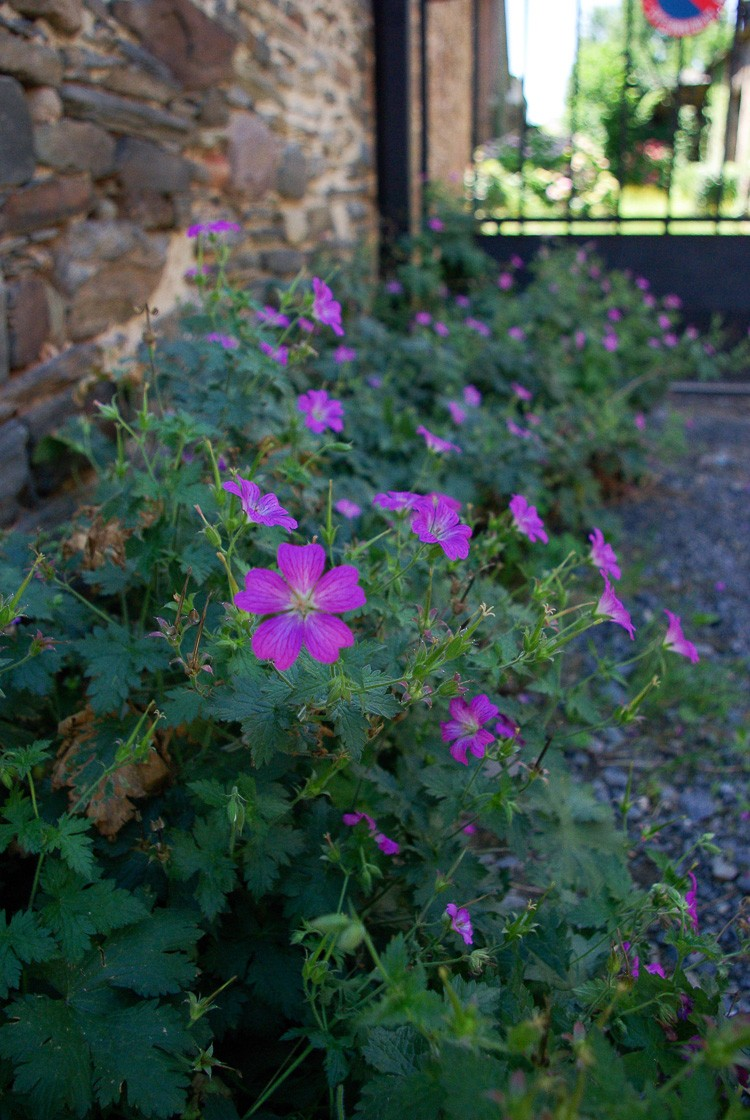 saillant-allassac-fleurs